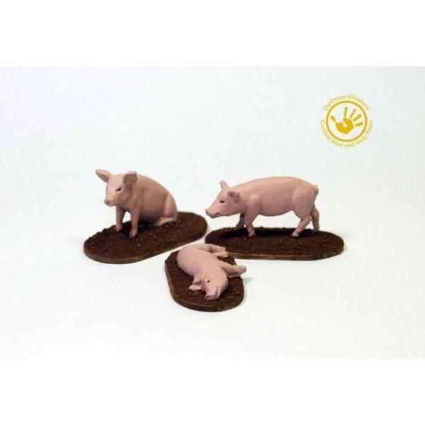 Schweine (3)