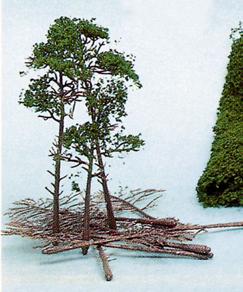 10 Kiefern 10-16 cm + HEKI flor