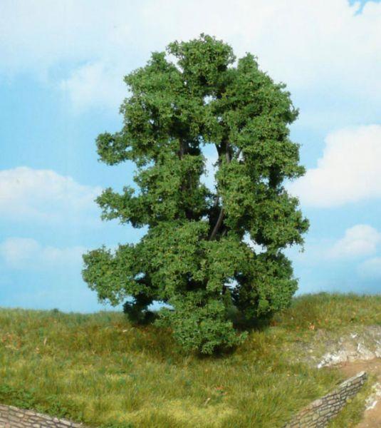 Wunderbarer Baum, der auh alleinestehend gut zur Geltung kommt.