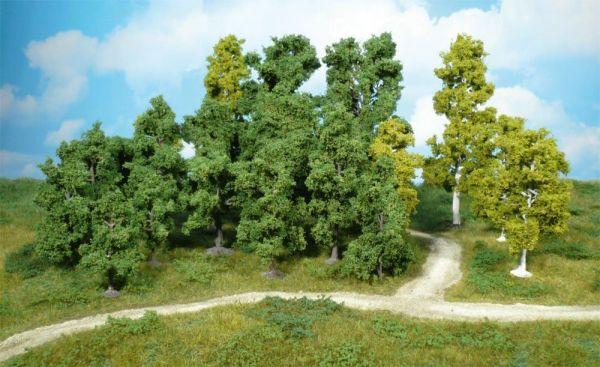 10 Obstbäume 8-12 cm von Heki